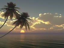 在海岛上的棕榈反对日落 免版税库存图片