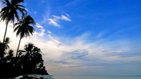 在海岛上的椰子树 免版税库存照片