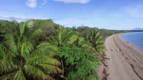 在海岛上的绿色树 股票录像