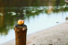 在海岛上的美味苹果 免版税库存照片