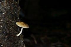 在海岛上的蘑菇 图库摄影