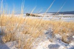 在海岛上的黄色干草在冬天 库存照片