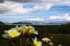 在海岛和海岸风景前的开花 免版税库存照片