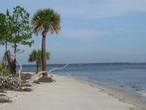 在海岛岸的树  免版税库存图片
