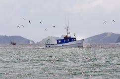 在海岛新西兰海湾的渔船  免版税图库摄影