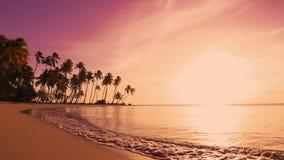 在海岛棕榈的红色日落靠岸 桃红色天空和美丽的海 影视素材