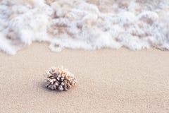 在海岛海滩沙子的海洋珊瑚  库存照片