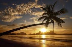 在海岛的背景的美好的日落有棕榈树的 免版税库存照片