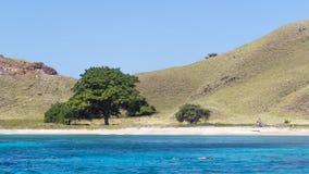 在海岛的结构树 免版税库存照片