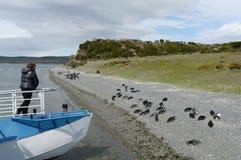 在海岛附近的旅游船有在小猎犬渠道的Magellanic企鹅的 免版税库存照片