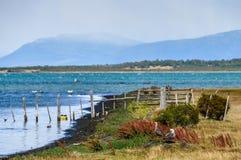 在海岛,纳塔莱斯港,巴塔哥尼亚,智利上的鸟 免版税库存图片