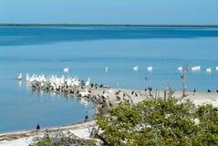 在海岛de los Pajaros上的鸟在Holbox 免版税库存图片