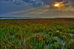 在海岸沼泽的清早太阳 库存照片