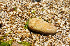 在海岸的一块大湿石头 图库摄影