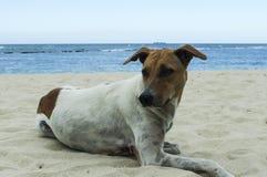 在海岸的一条哀伤的狗 免版税库存照片
