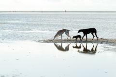 在海岸的三条狗 免版税库存图片