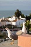 在海岸的两只逗人喜爱的海鸥请求在旅馆大阳台的食物 库存照片