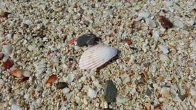 在海岸的壳 免版税库存照片