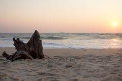 在海岸的断枝 免版税库存照片