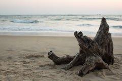 在海岸的断枝 库存照片