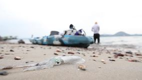 在海岸的新鲜的乌贼在钓鱼与海水以后 影视素材