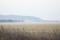 在海岸的早晨雾 免版税库存照片