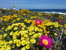 在海岸的春天花 免版税库存照片