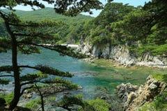 在海岸的杉树 免版税库存照片