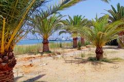在海岸的棕榈树 免版税库存图片