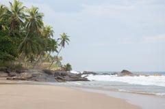 在海岸的棕榈树 库存照片