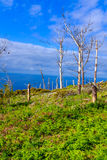 在海岸的死的树 免版税库存照片