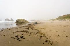 在海岸的漂流木头 库存图片