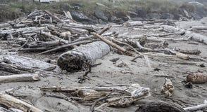 在海岸的漂流木头 免版税库存图片