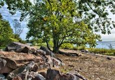 在海岸的结构树 免版税库存照片