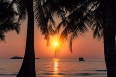 在海岸的美好的日落通过棕榈叶 免版税库存照片