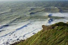 在海岸的草 免版税库存照片