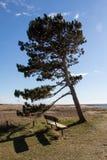 在海岸的长凳 免版税库存照片