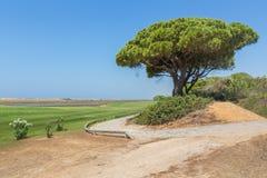 在海岸的风景与杉树 免版税库存照片