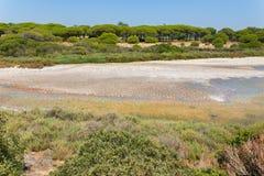 在海岸的风景与绿色植被 库存图片