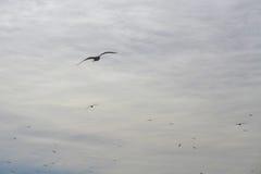 在海岸的飞行海鸥 免版税图库摄影