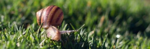 在海岸线公园山景城的蜗牛 库存照片