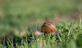 在海岸线公园山景城的蜗牛 库存图片