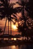 在海岸线的日落与棕榈树 免版税库存图片