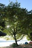 在海岸线的树 库存图片