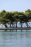 在海岸线的结构树 免版税图库摄影