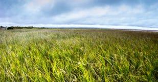 在海岸线的芦苇 免版税图库摄影