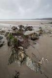 在海岸道路康沃尔郡英国英国上 库存照片