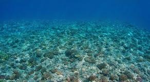 在海底上的水下的风景珊瑚 图库摄影