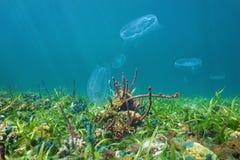 在海底的五颜六色的海洋生物与月亮水母 免版税库存照片