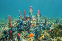 在海底的五颜六色的水下的海洋生物 库存图片
